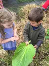 Knee High Naturalists